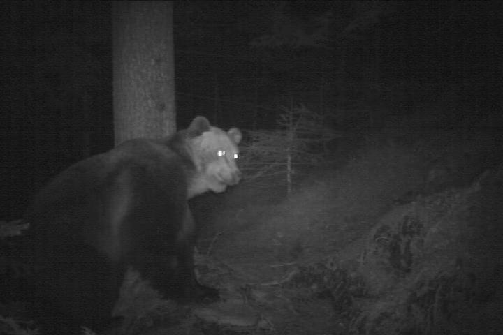 Video: «Orso bruno - Aprile 2014»