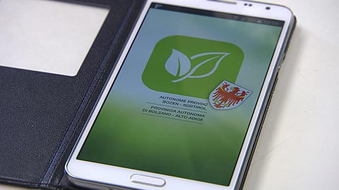 Video: «Pollen-app: nuova applicazione web per le persone allergiche. GNews Production»