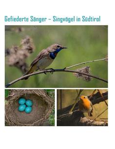 Video: «Gefiederte Sänger - Singvögel in Südtirol»