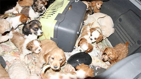 Video: «Das Land Südtirol an vorderster Front gegen den illegalen Tierhandel»