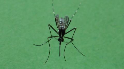 Video: «Tigermücke, Vorsorgemaßnahmen unerlässlich»