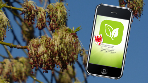 "Video: «Sempre informato con ""Pollen-app"". GNews Production»"
