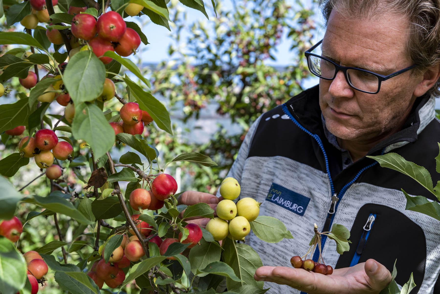 Video: «Walter Guerra, 20 Jahre Erfahrung mit dem Apfel»