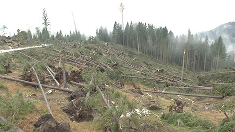 Video: «Maltempo in Alto Adige, stabilire priorità e piani d'intervento»