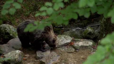Video: «Chi è l'orso?»