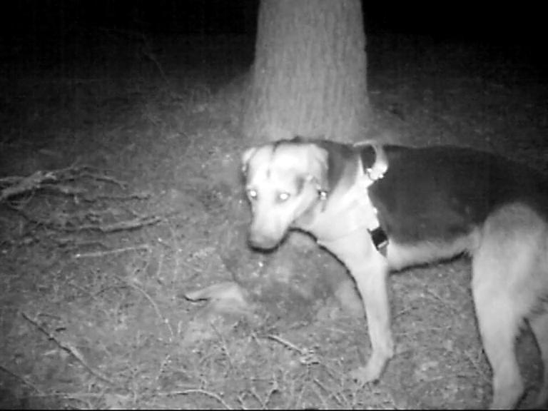 Video: «Fototrappola cani - Ottobre 2014»