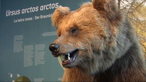 Video: «L Museum Ladin Ursus ladinicus pieta cësa ala lores M12»