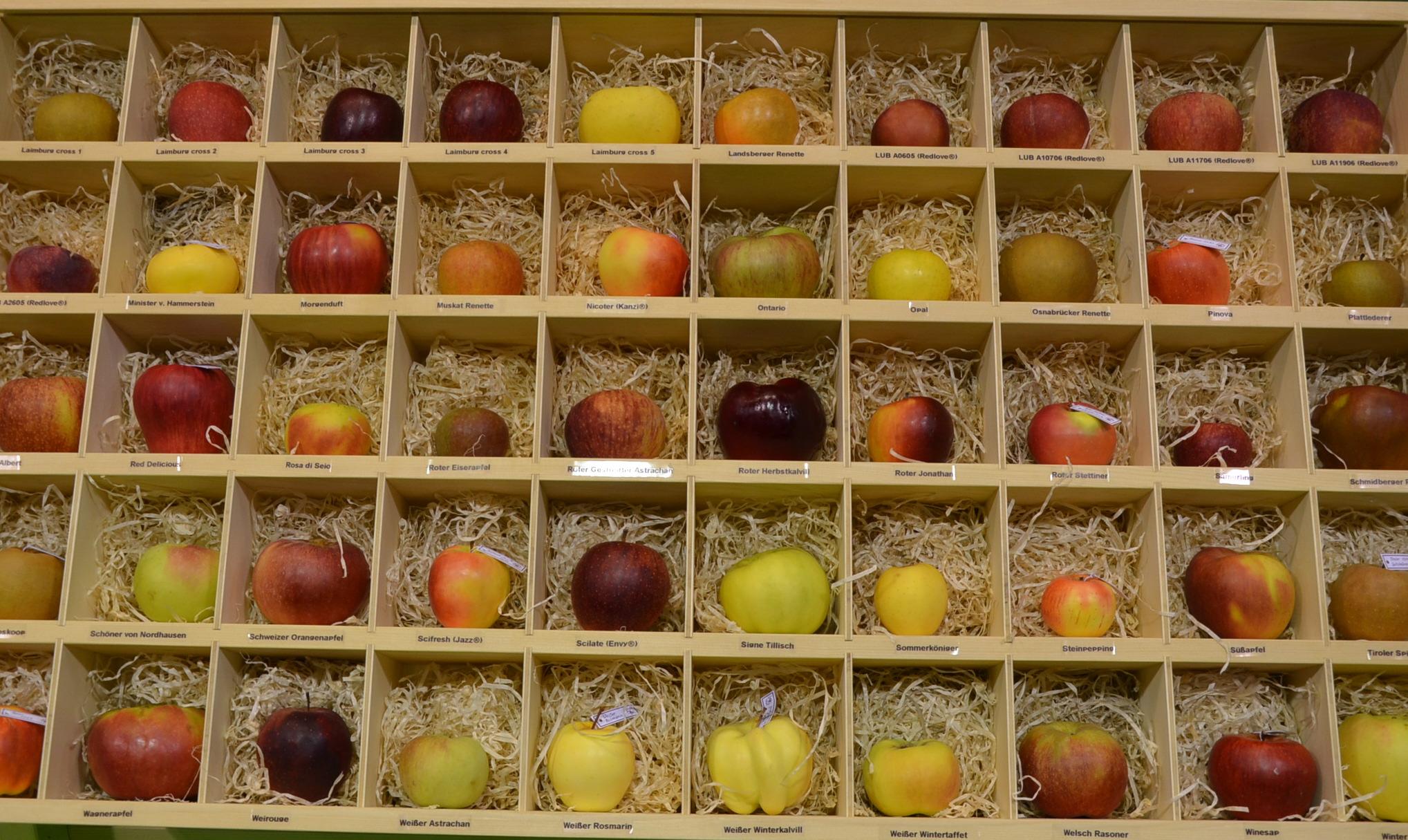 Video: «Die neuen Apfelsorten»