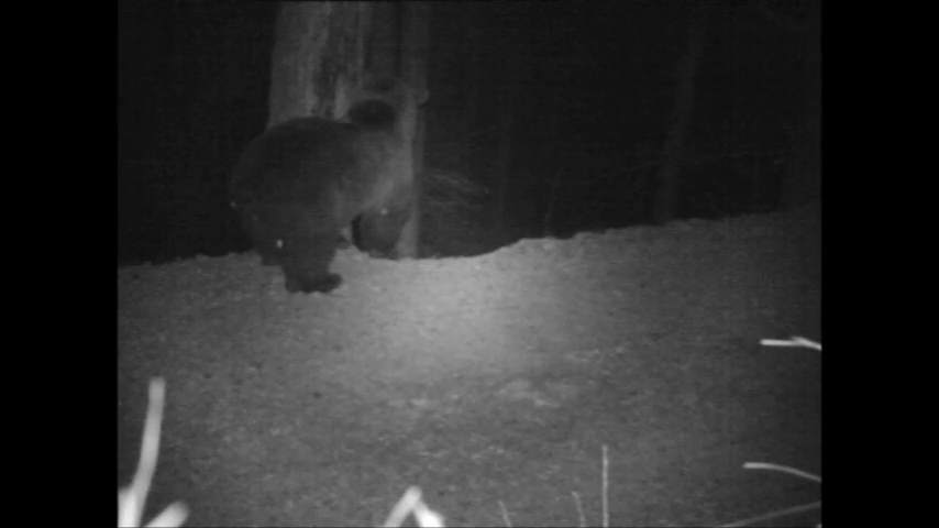 Video: «Orso bruno in Alto Adige - Aprile 2015»